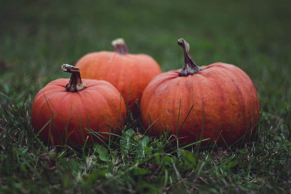 How to treat yourself to a healthy halloween