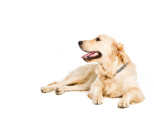 Protecting Dogs from Lyme Disease