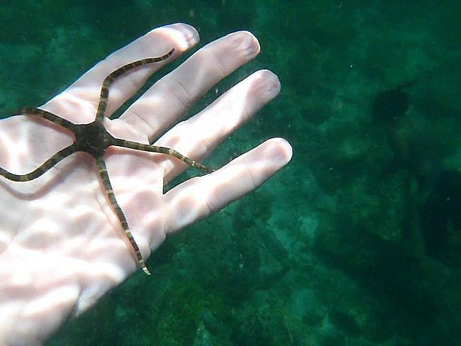 Starfish Costa Rica 2