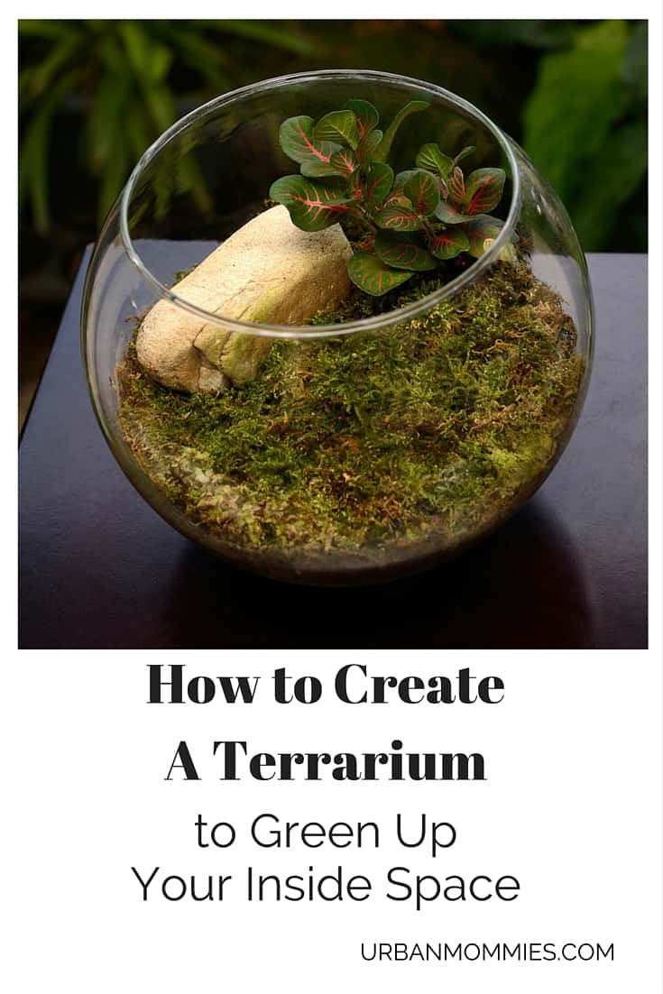 How to Create a Terrarium (1)