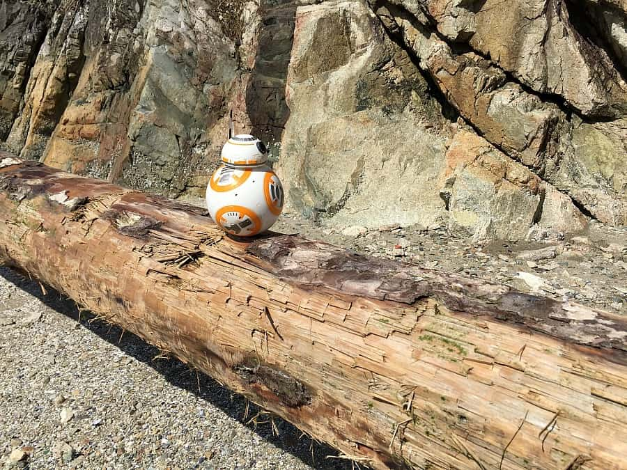 BB8 on a Log