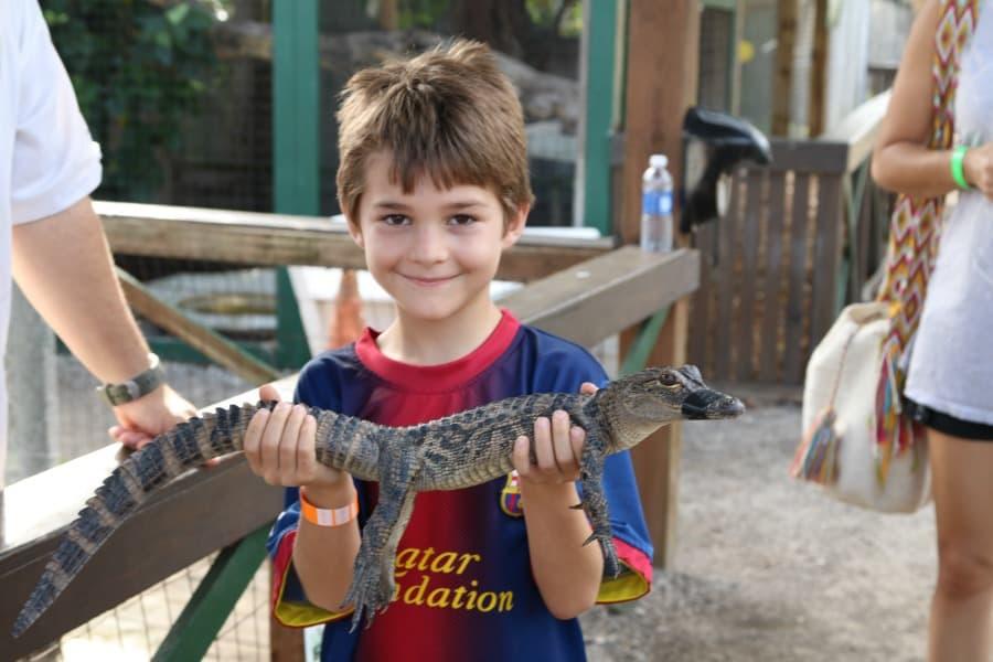 hold-baby-alligator