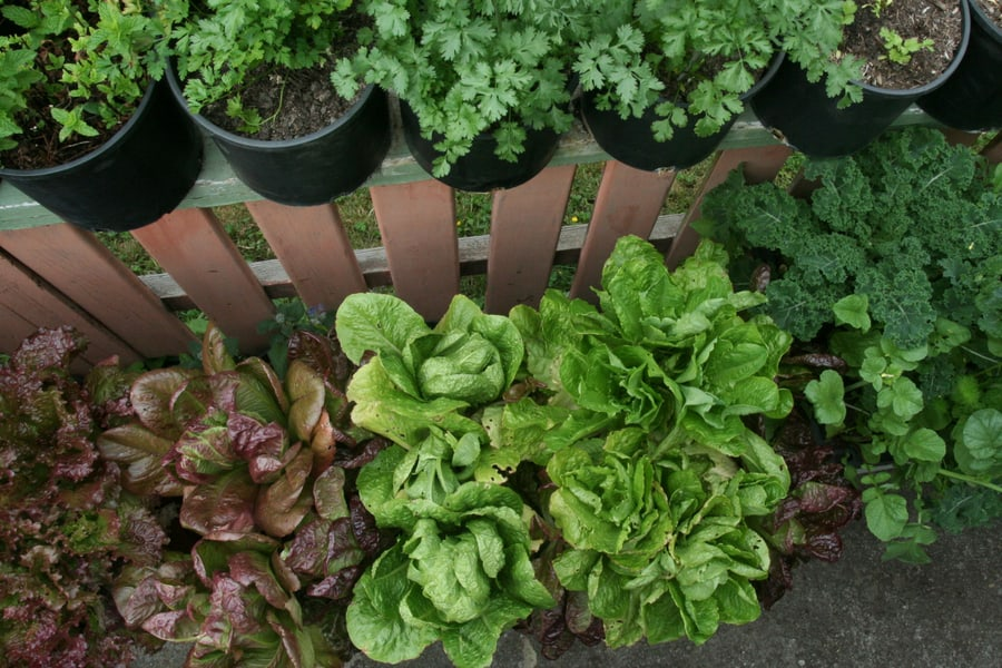 How To Find Time To Grow Food concept image of planters with plants