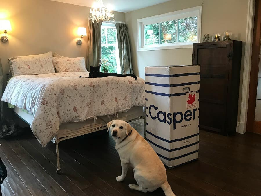 Casper mattress and pets