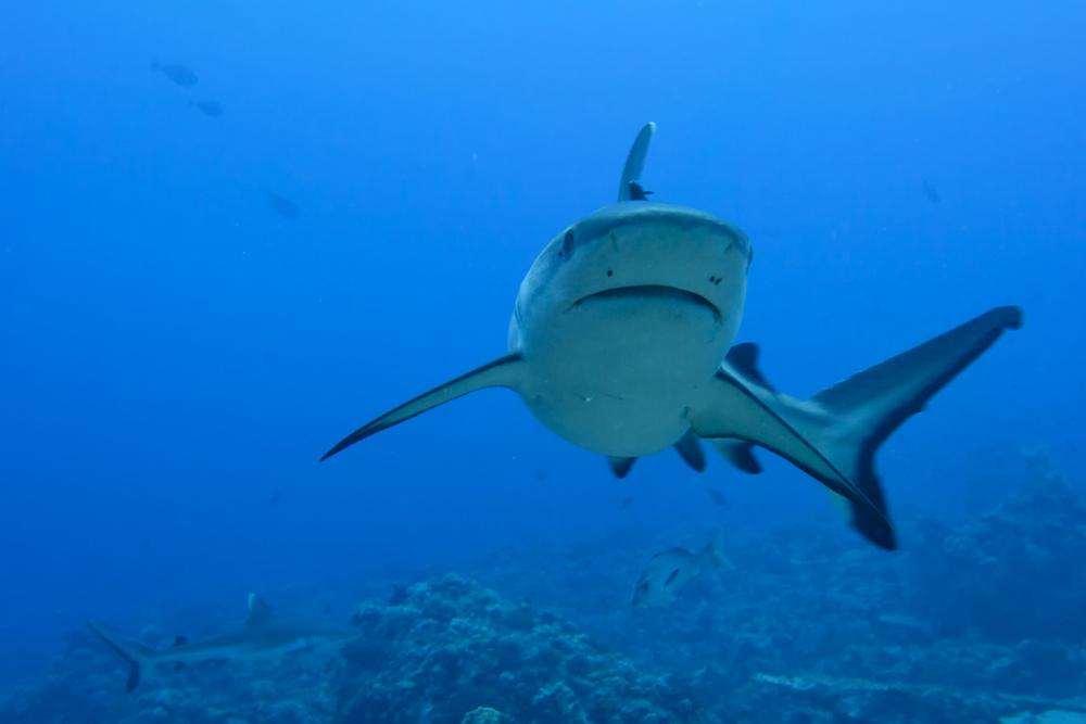 Shark Camera